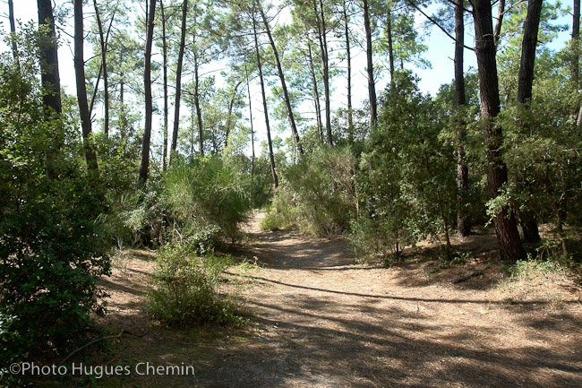 Forêt 2 minutes