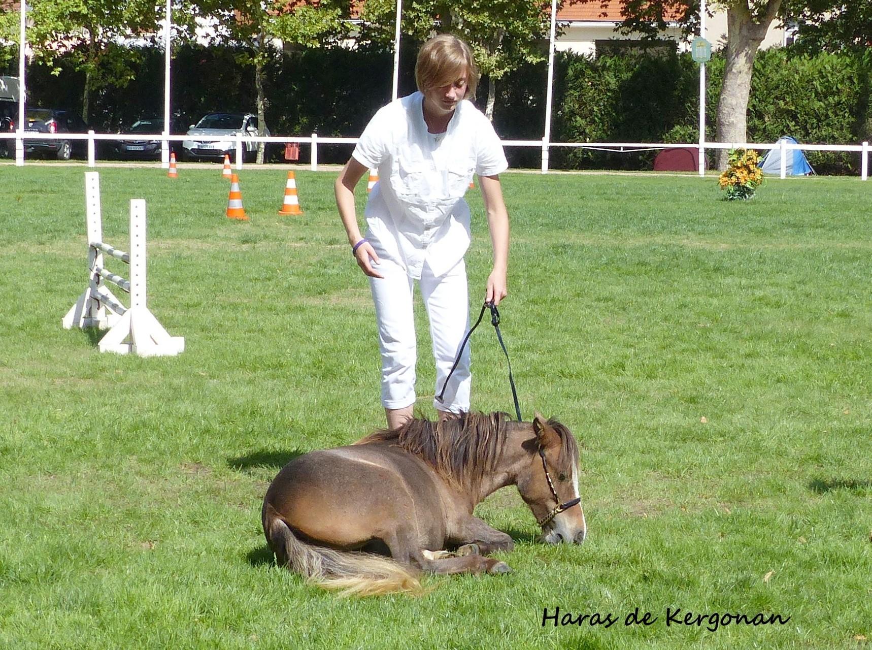Et Moi de Kergonan à Vichy - Concours AFCM - Août 2015 - 16 mois