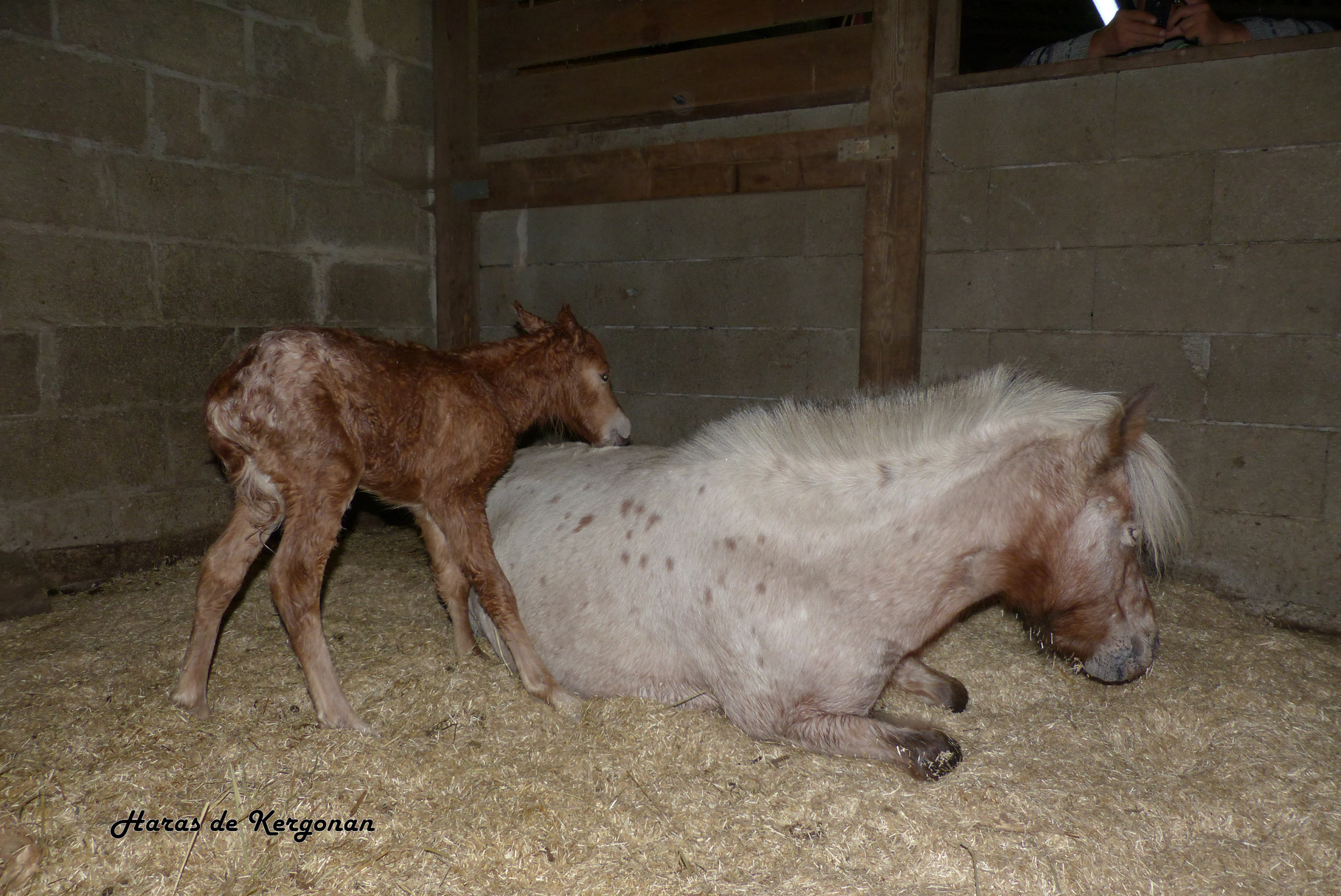 29/09/2014 20h49 : maman et son poulain sont rentrés au boxe