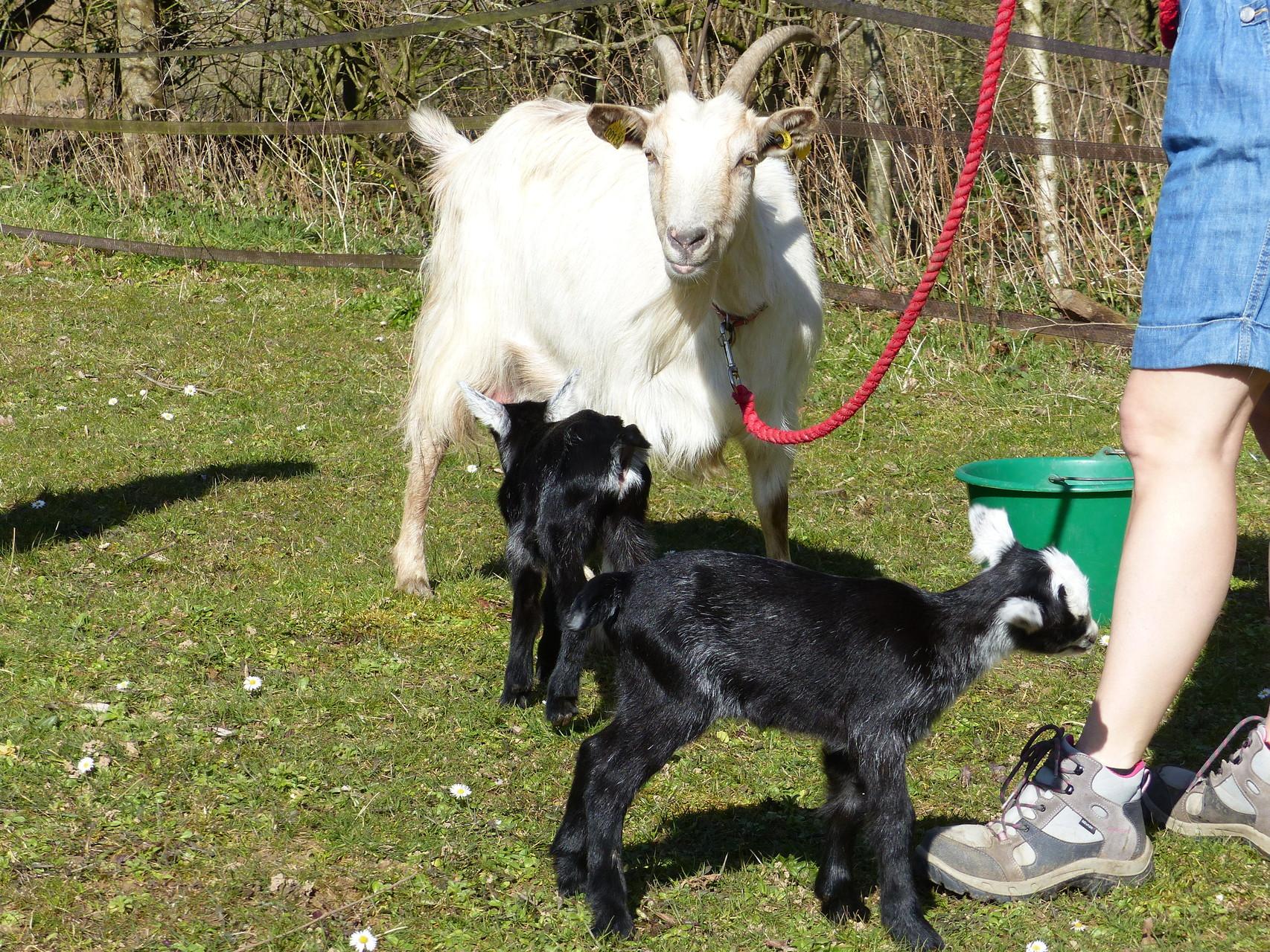 Gomette et ses petits le 07 mars 2015