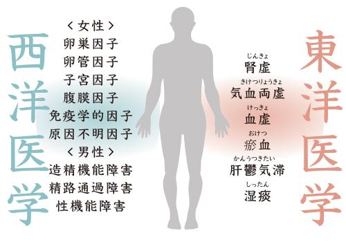 西洋医学、東洋医学 不妊症の原因