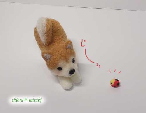 天道虫で遊ぼうとする柴犬さん、お尻あげてますw