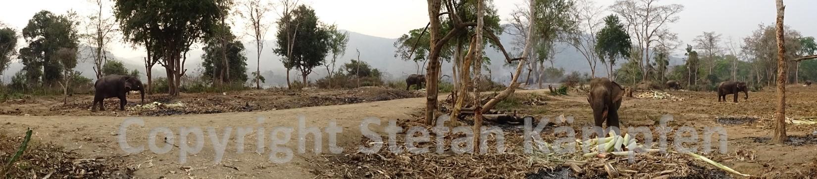Elefanten wohin das Auge reicht - sehr zur Freude der Touristen