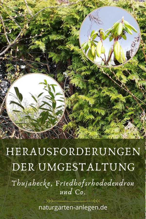 HERAUSFORDERUNGEN DER UMGESTALTUNG (THUJAHECKE, FRIEDHOFSRHODODENDRON UND CO.)