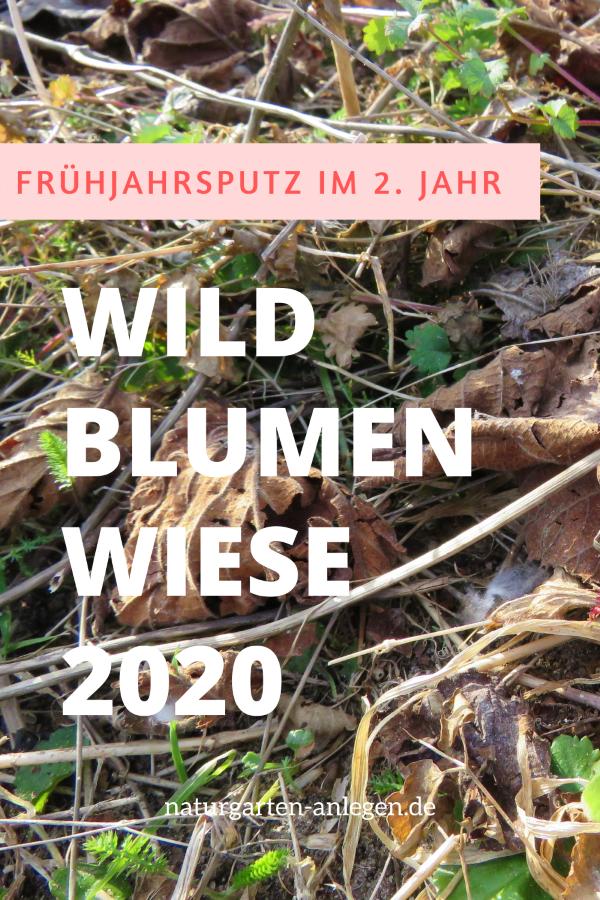 WILDBLUMENWIESE 2020: FRÜHJAHRSPUTZ IM 2. JAHR