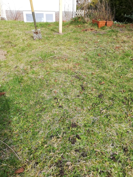 Hier entsteht eine kleine Blumenwiese