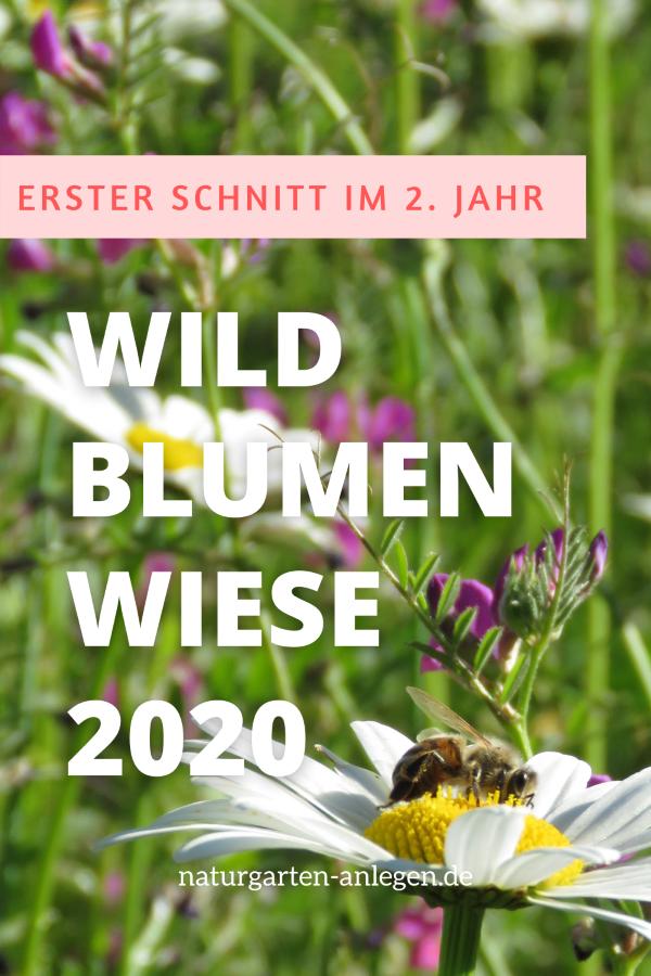 WILDBLUMENWIESE 2020: ERSTER SCHNITT IM ZWEITEN JAHR (PLUS PFLANZWETTBEWERB)