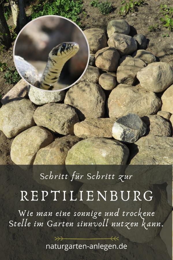 SCHRITT FÜR SCHRITT ZUR NEUEN REPTILIENBURG