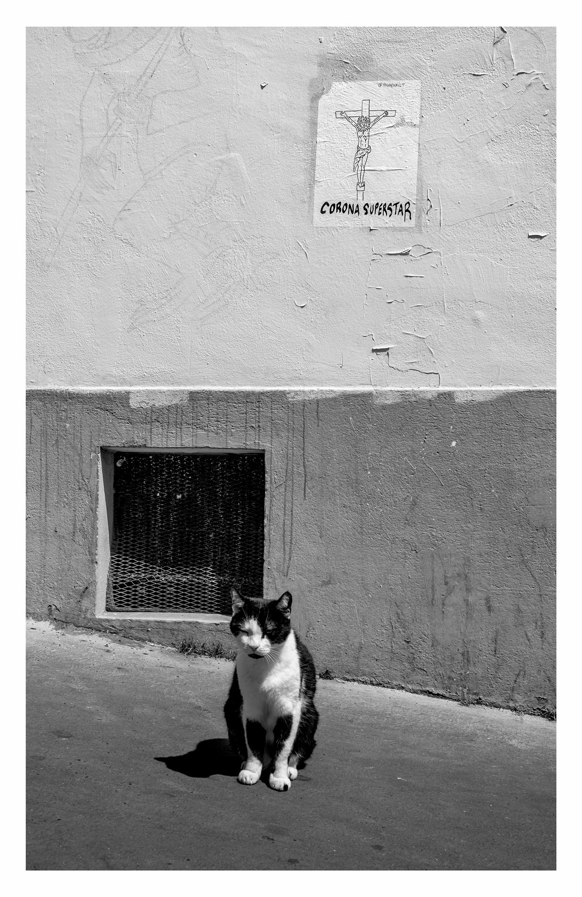 Chat Covid - Paris.