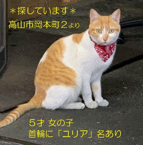 ☆§☆緊急!土地勘のない猫を探しています!☆§☆