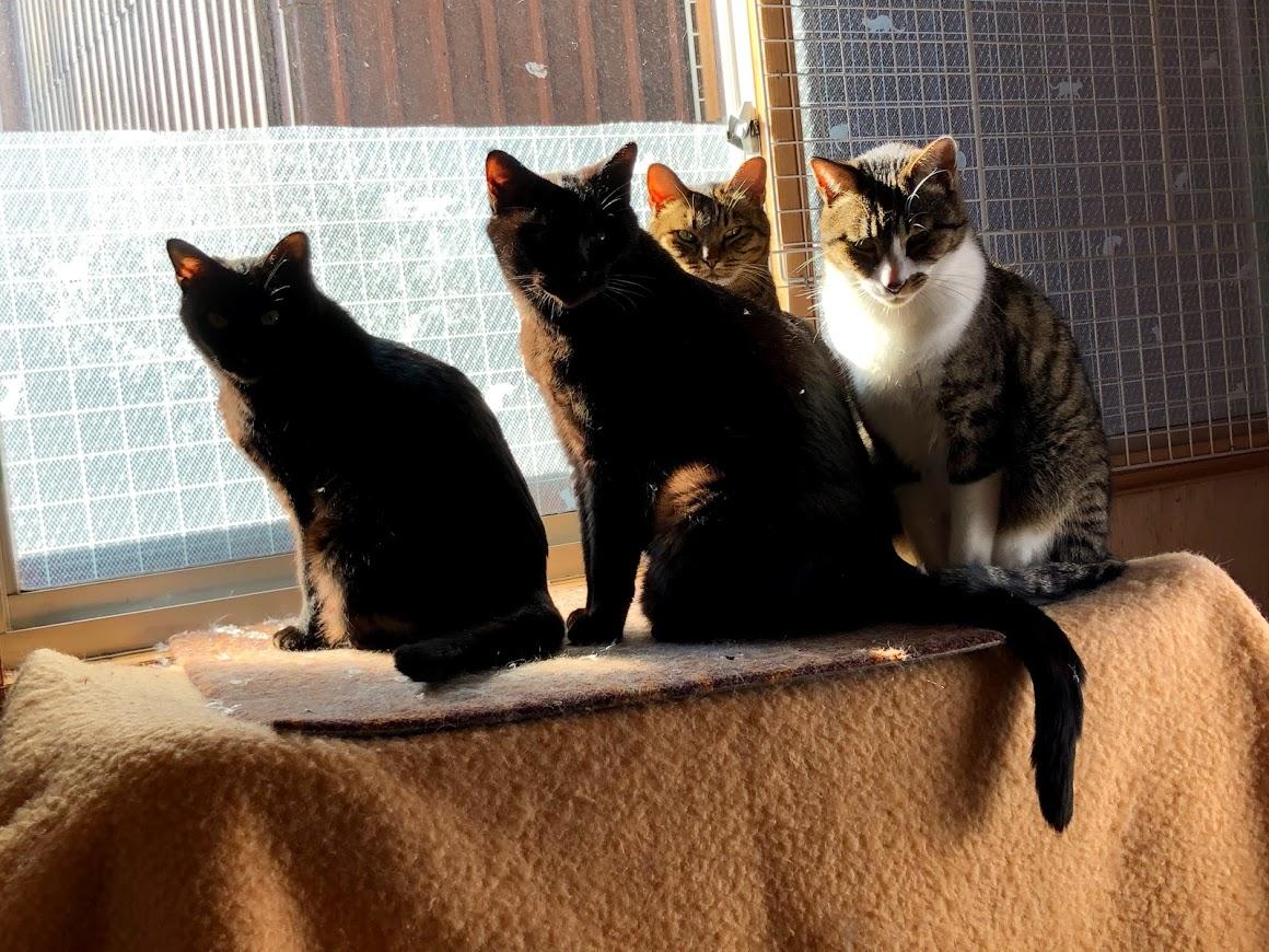 【超緊急 高齢猫5匹 7/1午前までに行き先が必要です】
