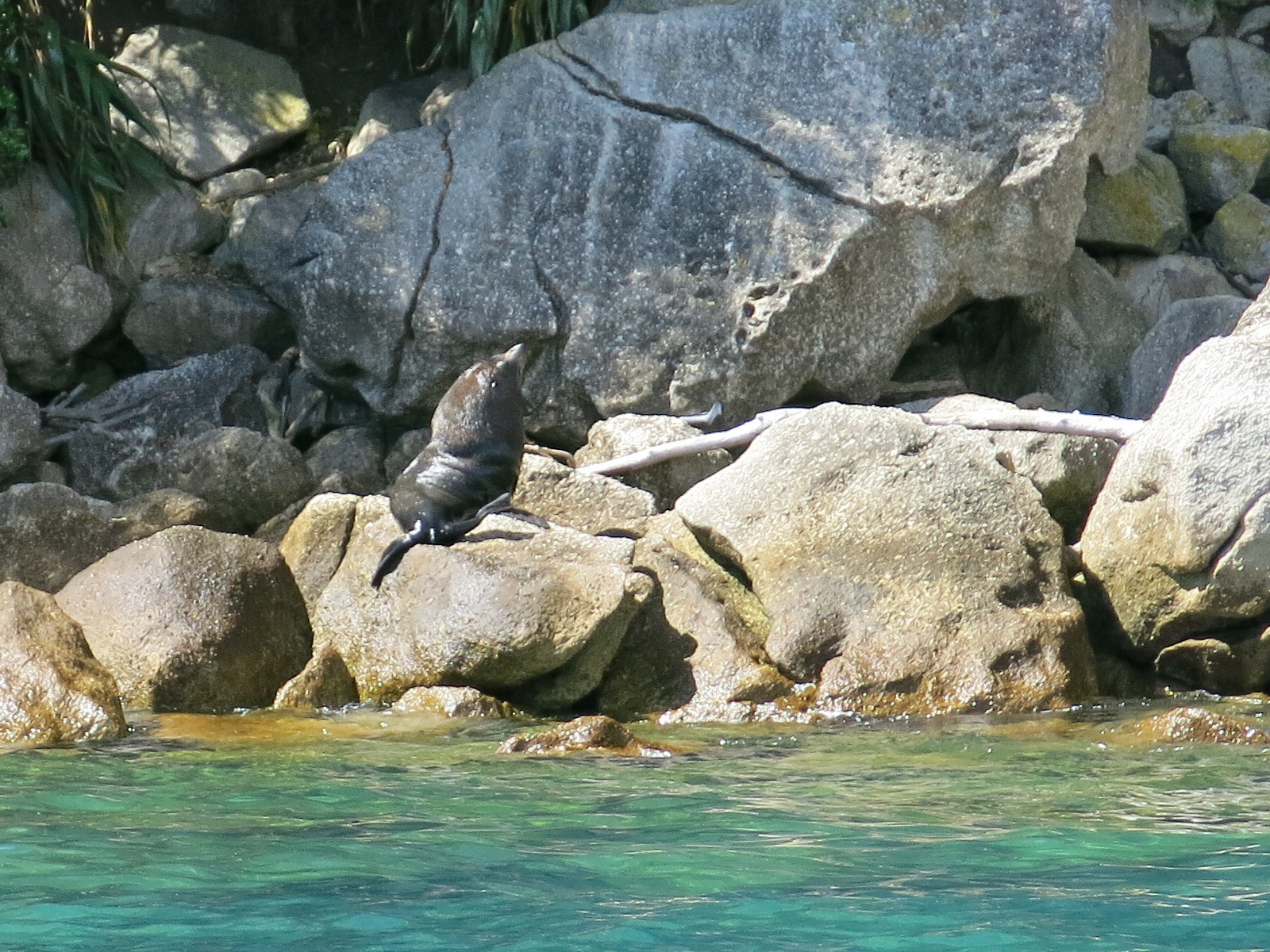 Seals / Abel Tasman national Park