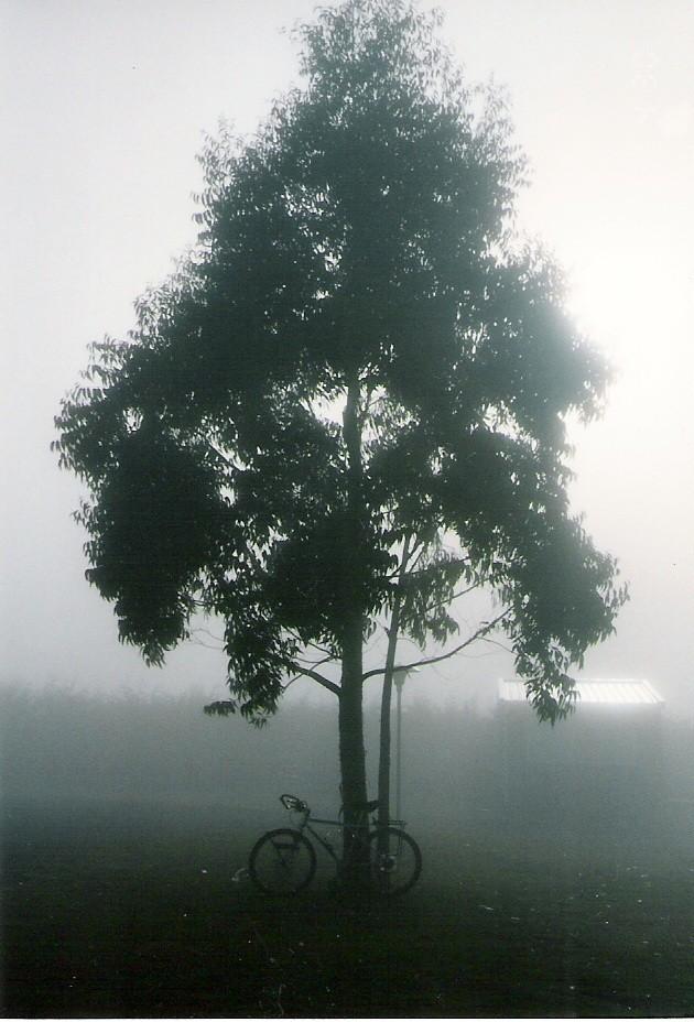 タウポ湖畔のキャンプ場の早朝