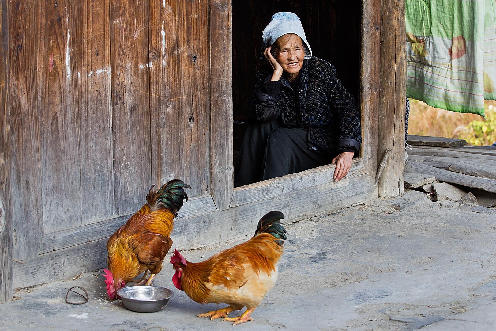 Claudine Bourdon : Les poules