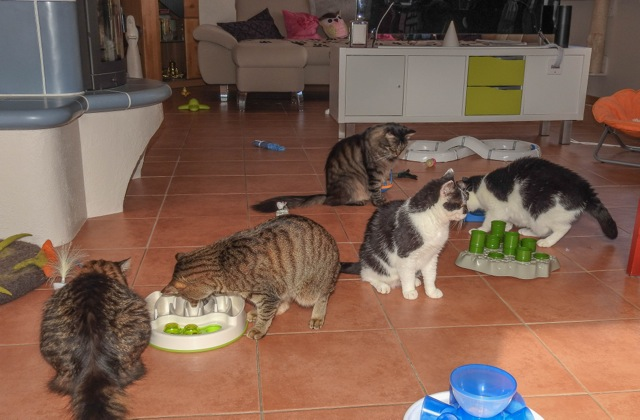 Bild: Kater Stani und seine Freunde
