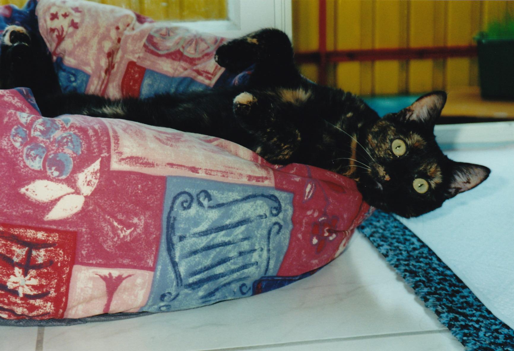 Lissy, gest. 2010 (geb. 1999)