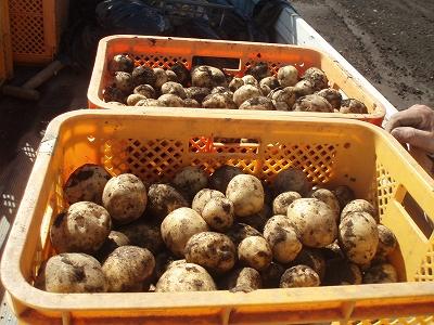 無農薬で育てた旬の野菜、お米、ゴマ、黄な粉や油など♪