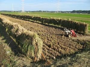 「田んぼと畑の耕育教室」を開催しています。