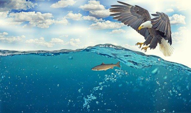 MOWI Aktienanalyse - die ehemalige Marine Harvest auf dem Prüfstand