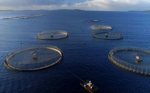Mowi Aquakultur - Bildquelle: consumerreportsreview.com