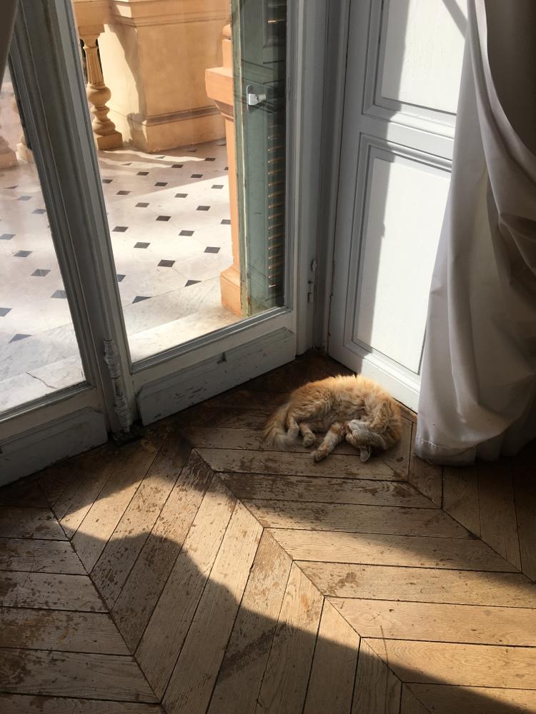 猫が端っこで寝てる美術館は初めて