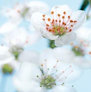 Zeit für einen neuen Frühling in Ihrem Leben?