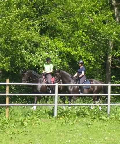 ...Zielsetzung an diesem WE war ein entspanntes Ausreiten mit einem wachen, aber durchlässigen Pferd...
