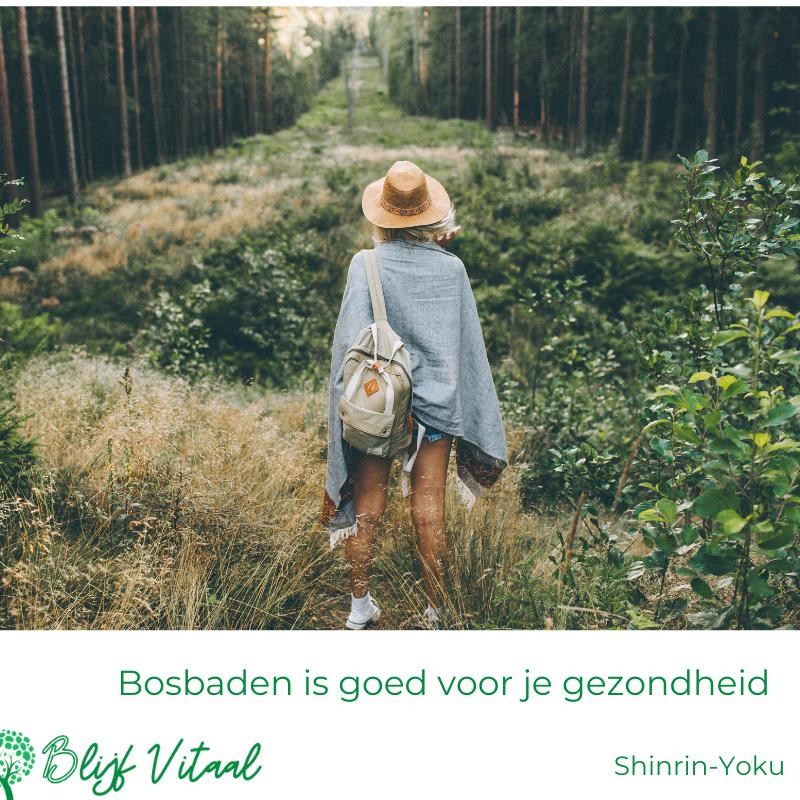 Blog 46: Shinrin-Yoku: bosbaden