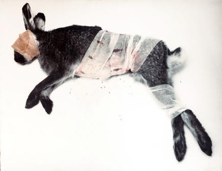 MARIELIS SEYLER, Hase liegend, 1997, Fotoemulsion auf Barytpapier, Verbandsmaterial, Blut, Kreide, 76x100cm