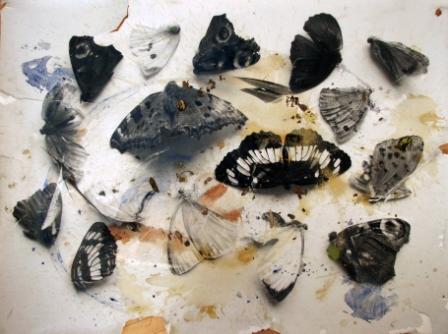 MARIELIS SEYLER, Trampelbild Schmetterlinge 3, 2014, Fotoemulsion auf Barytpapier, 110x150cm