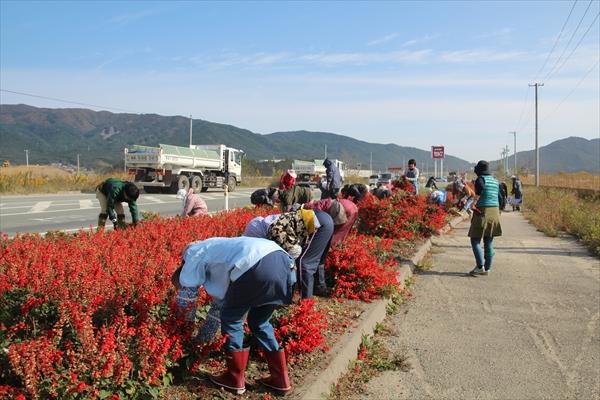 陸前高田フラワーロード 花壇の撤収作業