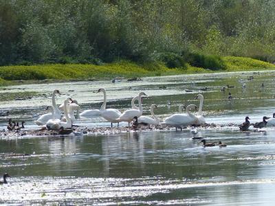 La Sologne et ses étangs