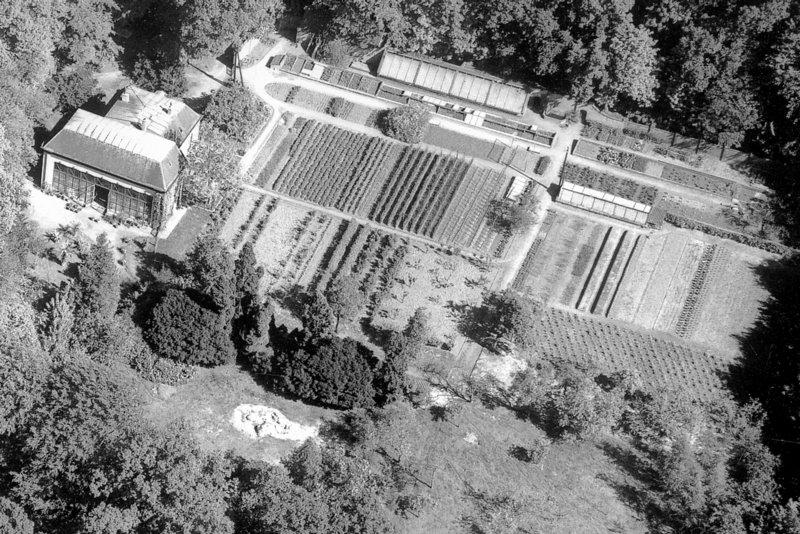 De economietuinen en de oranjerie op een foto uit circa 1950.