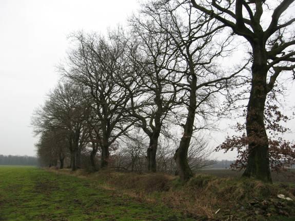 Een van de vele houtwallen in en rond Westdorp.