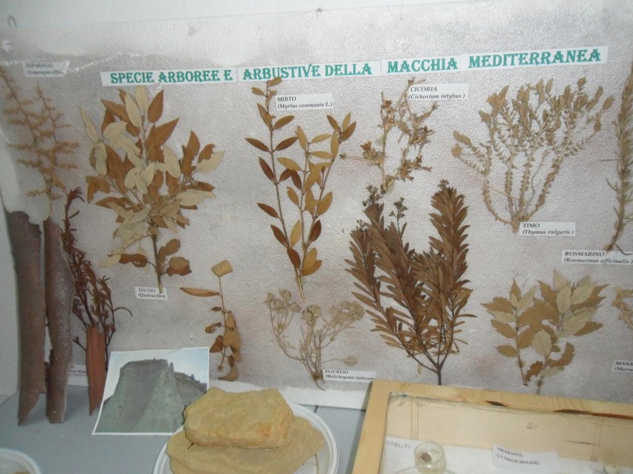 Specie arboree della Riserva!
