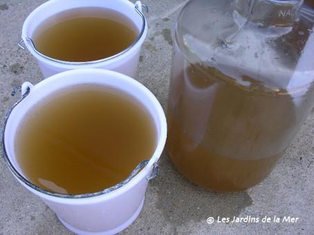 """Notre """"boisson aux algues"""", un régal pour les coquillages !"""