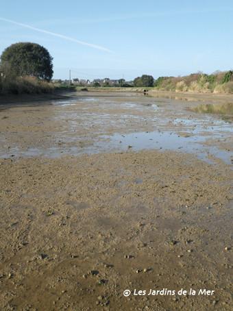 6 janvier 2012 - début de l'assec hivernal de la lagune
