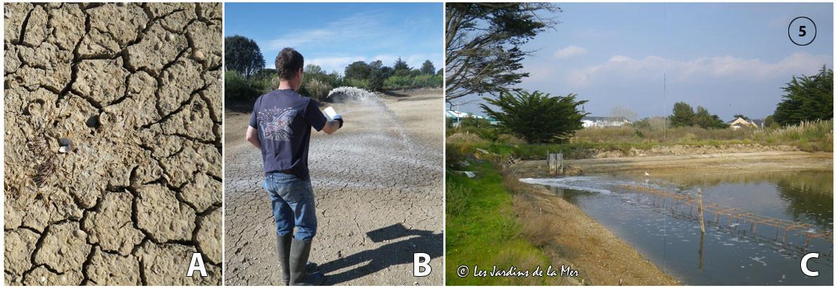 A - assec réussi / B - passage à la chaux vive / C - remplissage de la lagune durant la grande marée de fin mars