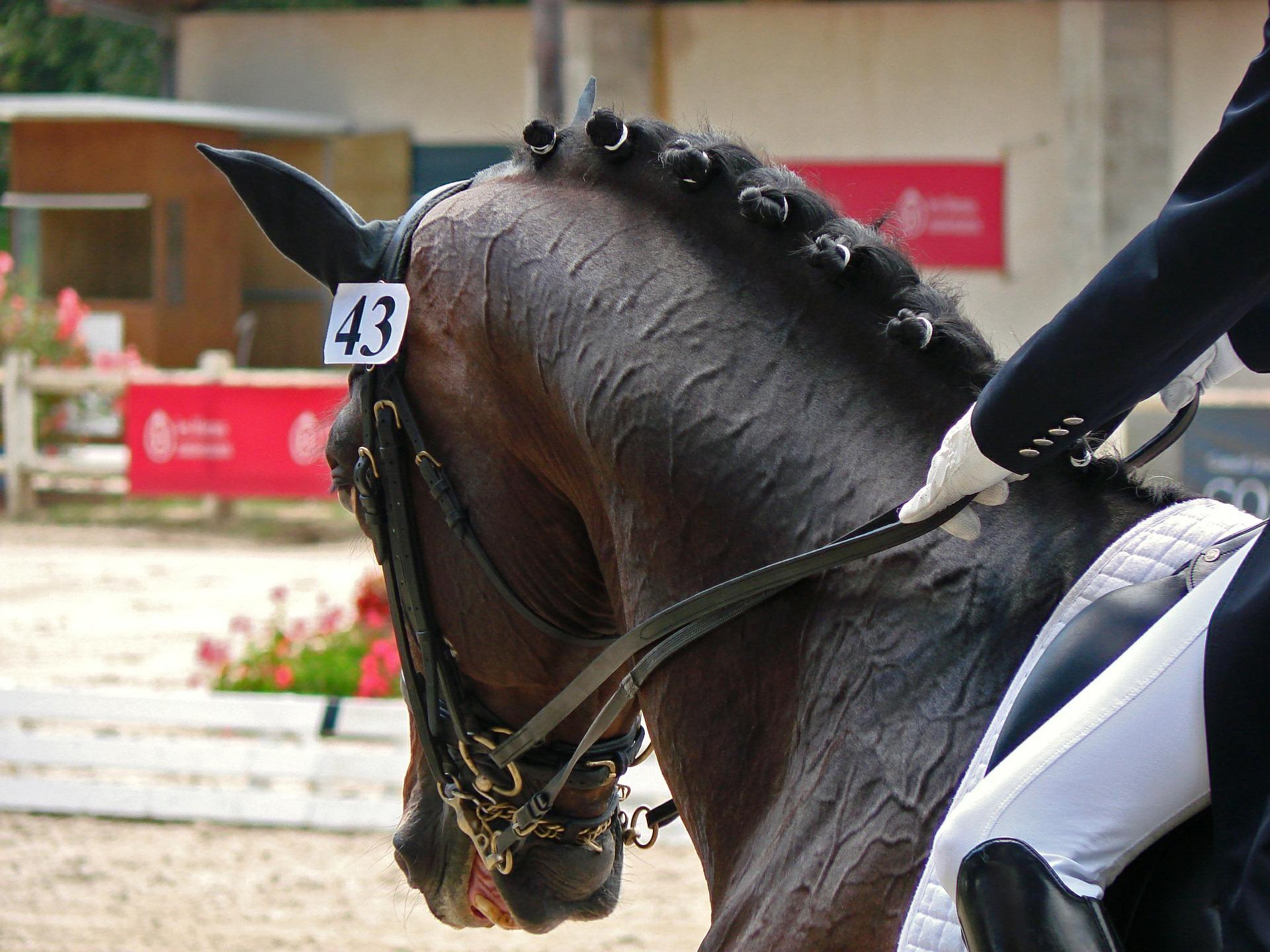 Est-ce-que votre cheval a une bonne capacité de mémorisation et de compréhension ?