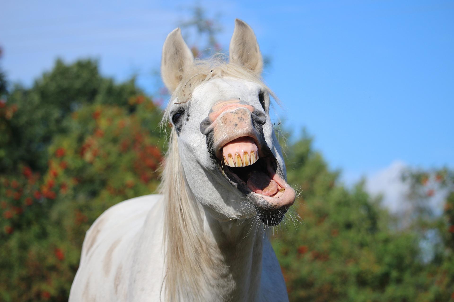 Est-ce-que votre cheval a une nature expressive ?