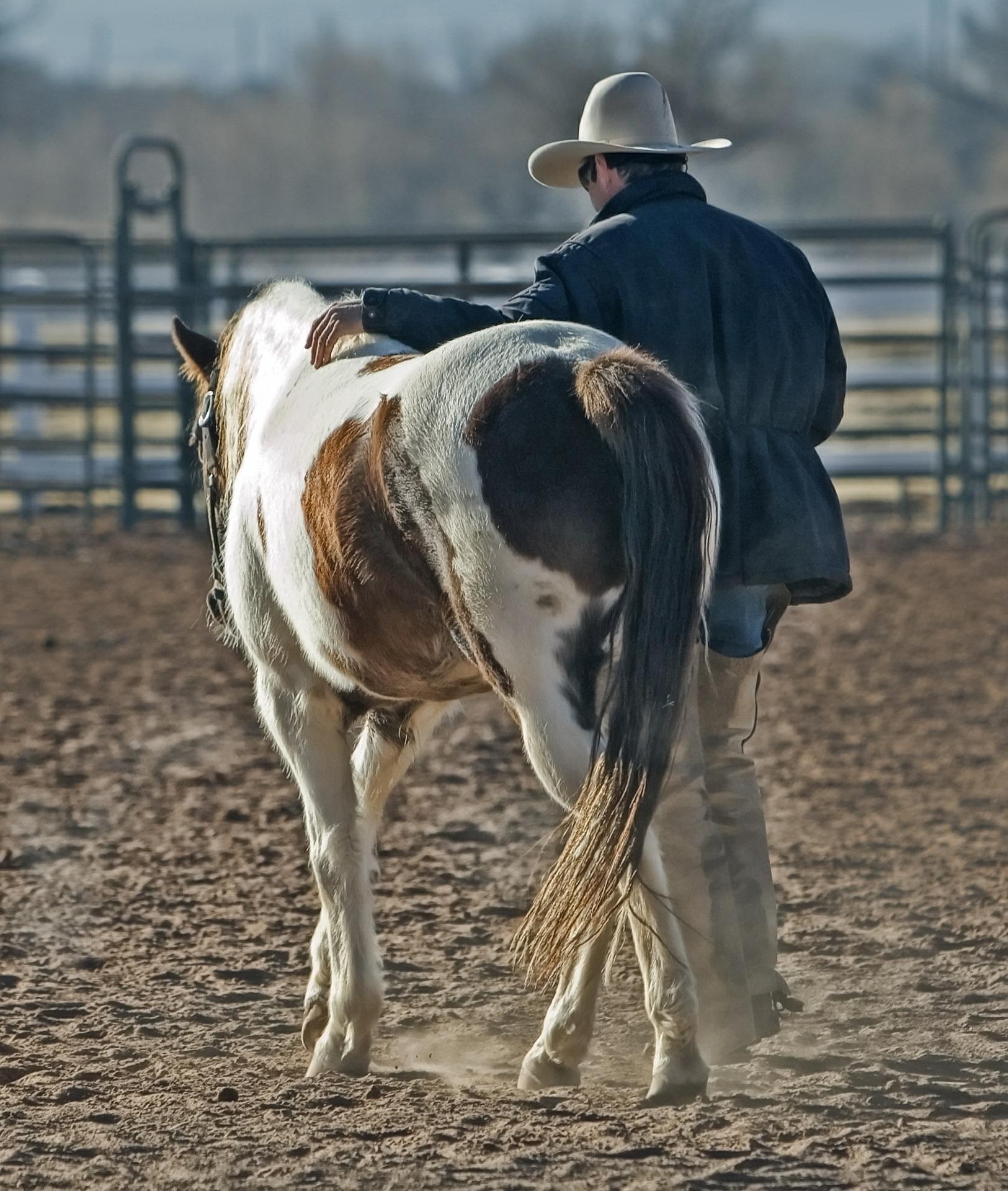 """Êtes-vous un """"horsemanship ?"""