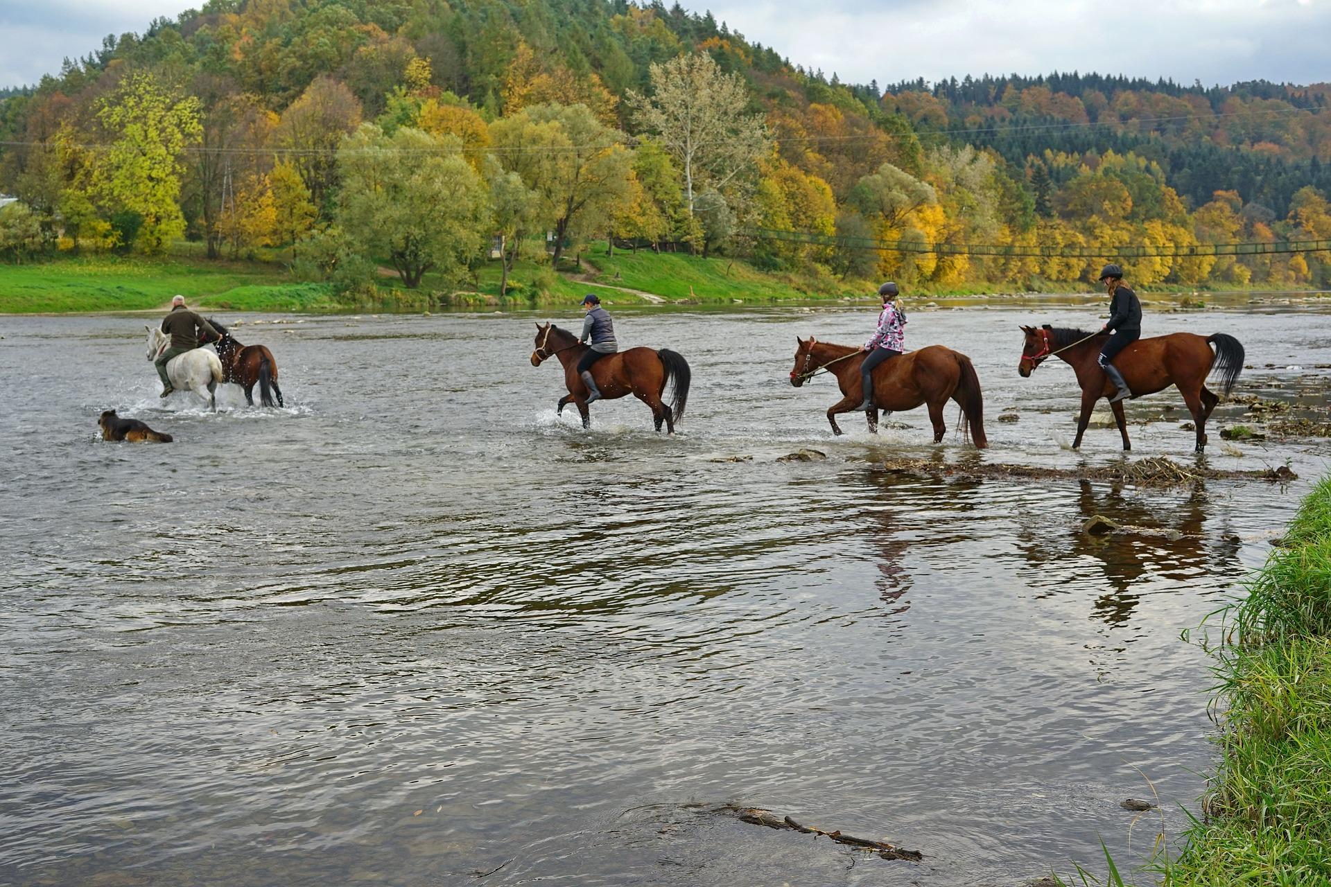 Est-ce-que votre cheval est un passe partout ?