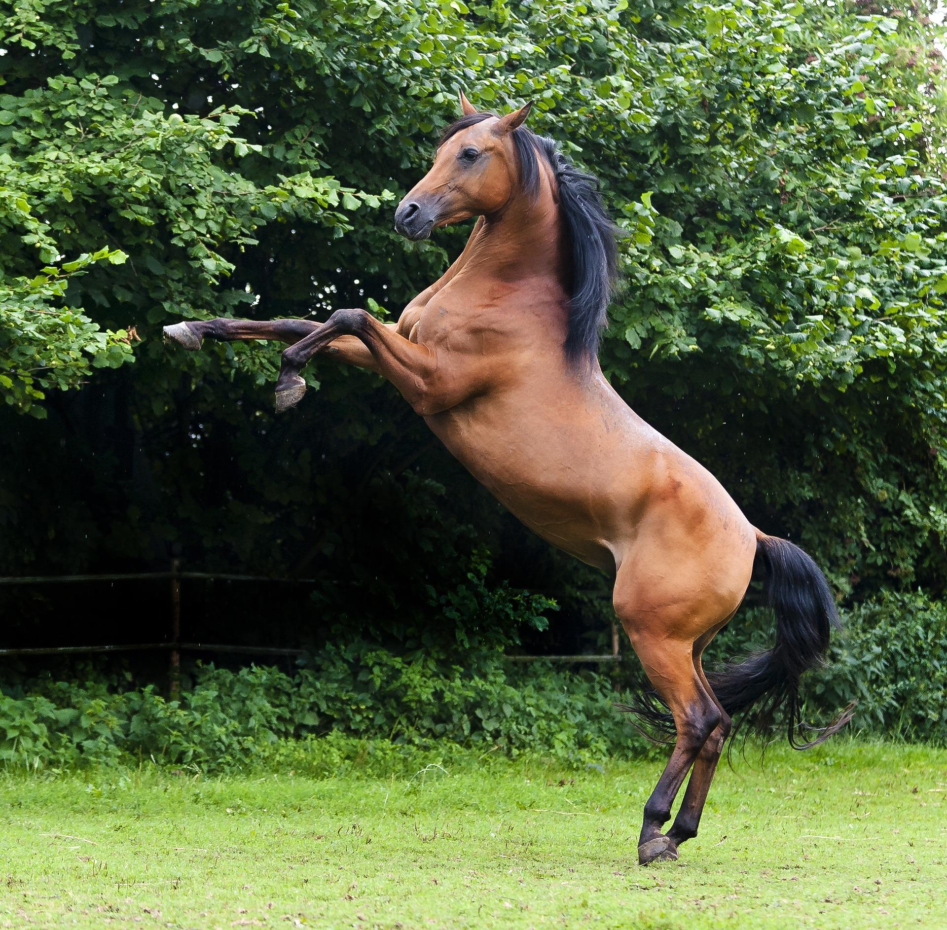 Est-ce-que votre cheval a une nature rebelle ?
