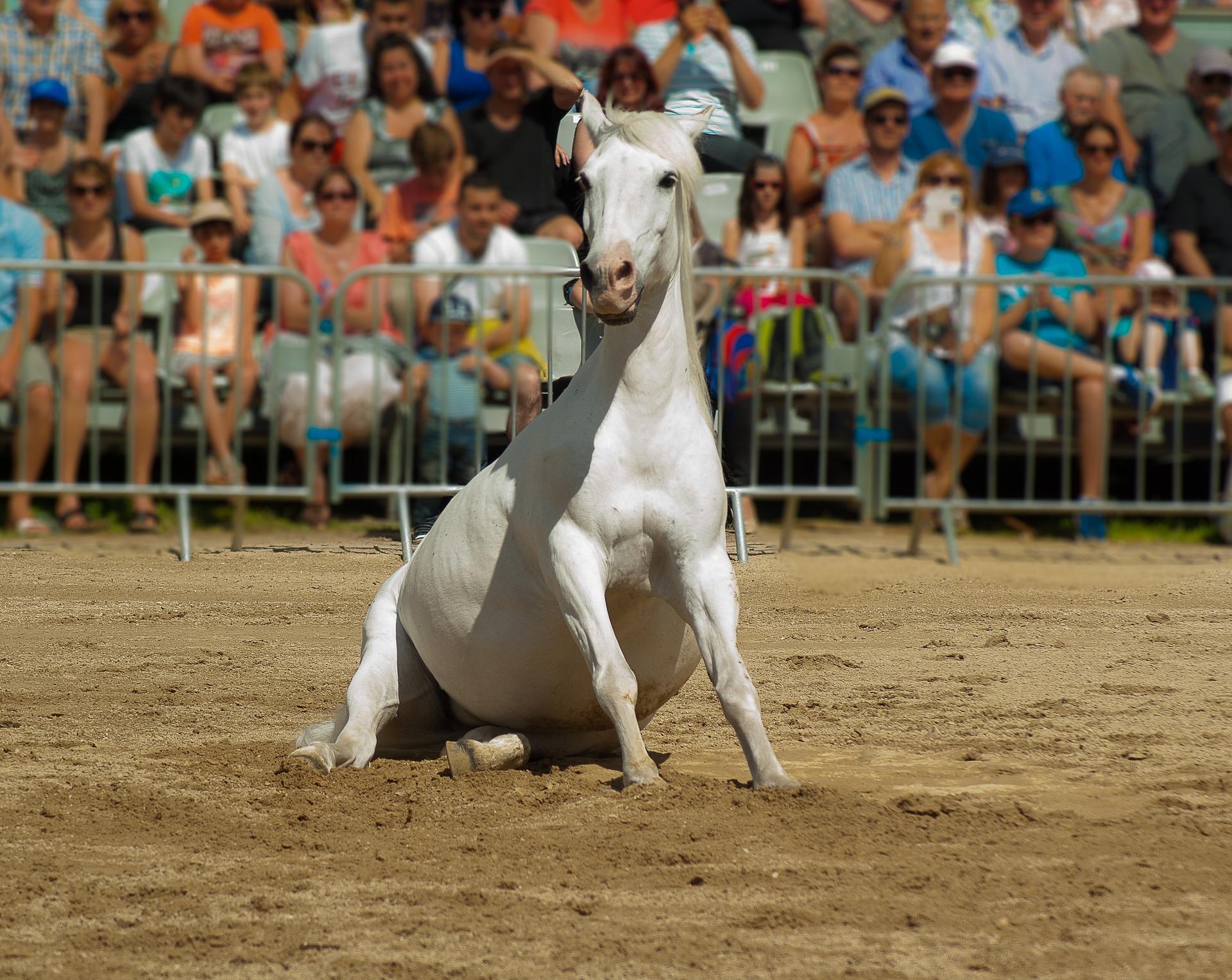 Est-ce-que votre cheval est à l'aise face à un public ?