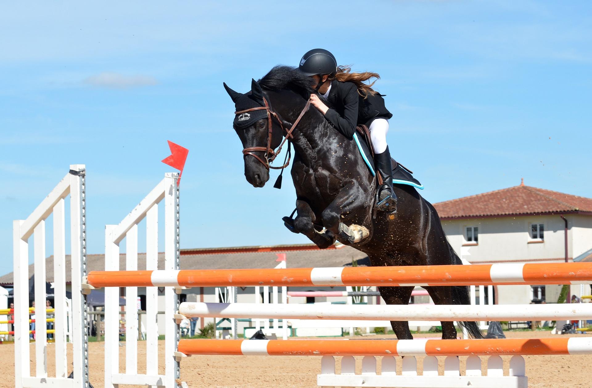 Est-ce-que votre cheval est aussi performant à l'entraînement qu'en concours ?
