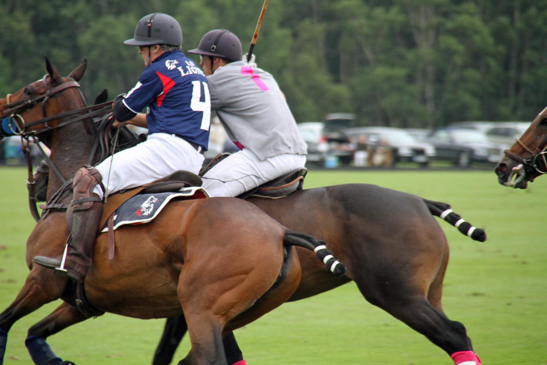 Est-ce-que votre cheval est adapté aux disciplines équestres de groupe ?