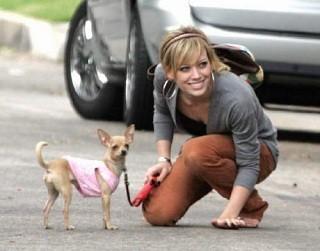 Foto de Hilary Duff con su chihuahua de pelo corto