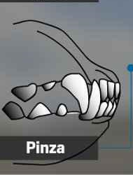 Dentadura con cierre en pinza o tenaza