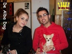 Foto cachorro chihuahua macho de color crema y pelo largo de los criadores de perros de raza chihuahua De Alba Dog, venta de cachorros chihuahua de pelo corto y largo con pedigree y afijo en Valencia, Comunidad Valenciana, España