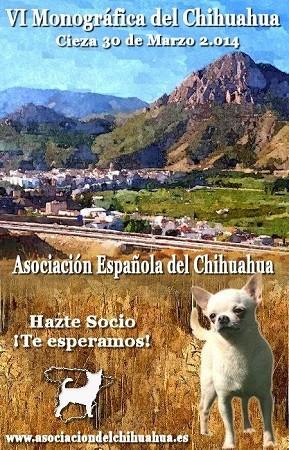 VI Monografica del chihuahua de marzo de 2014, en la imagen perro de raza chihuahua de pelo corto